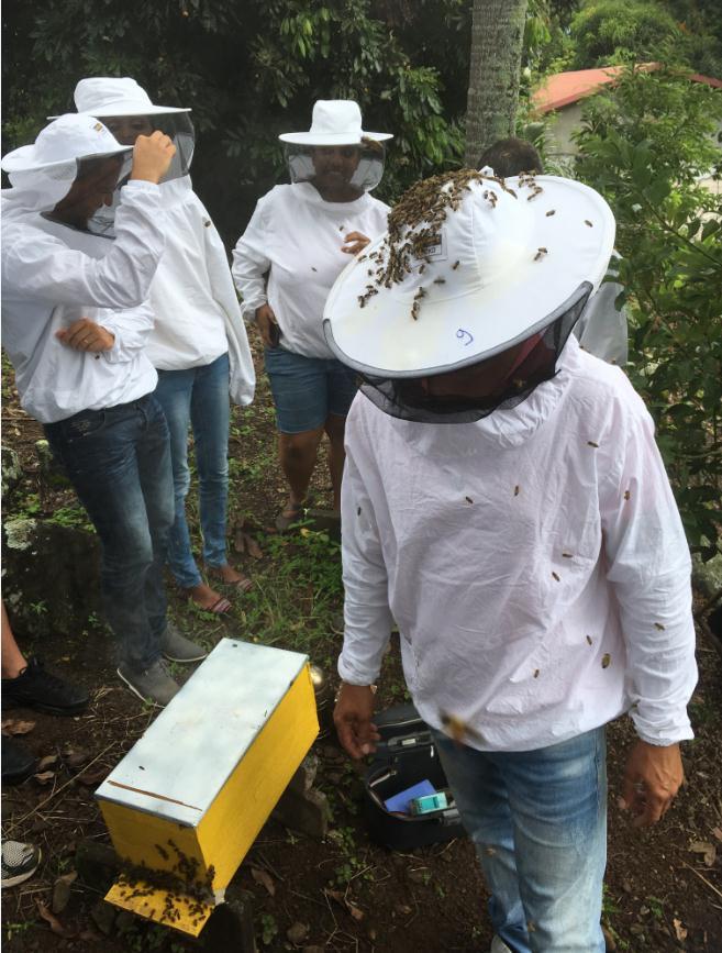 des abeilles plein la tête