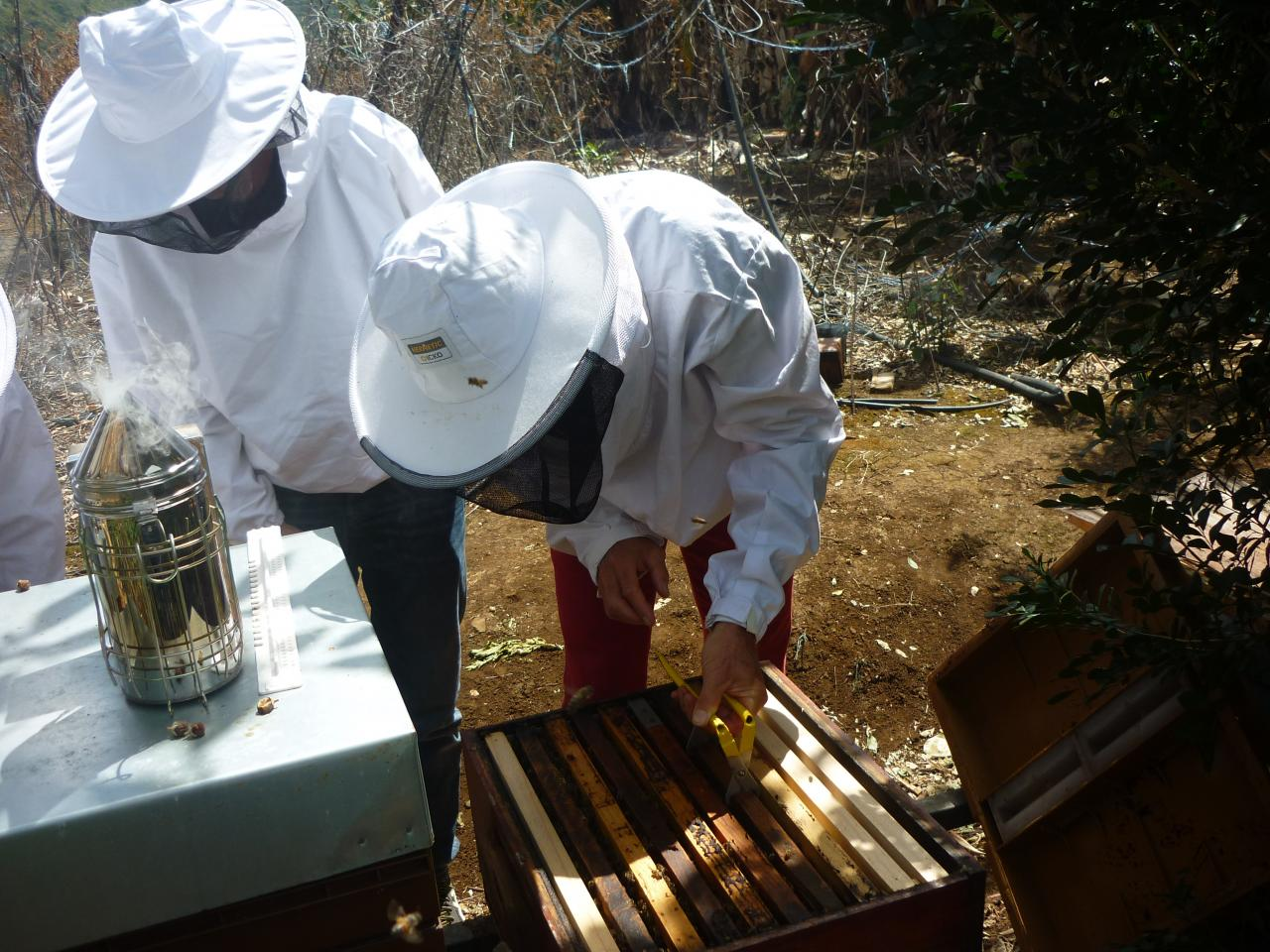 Ouverture ruche en binome