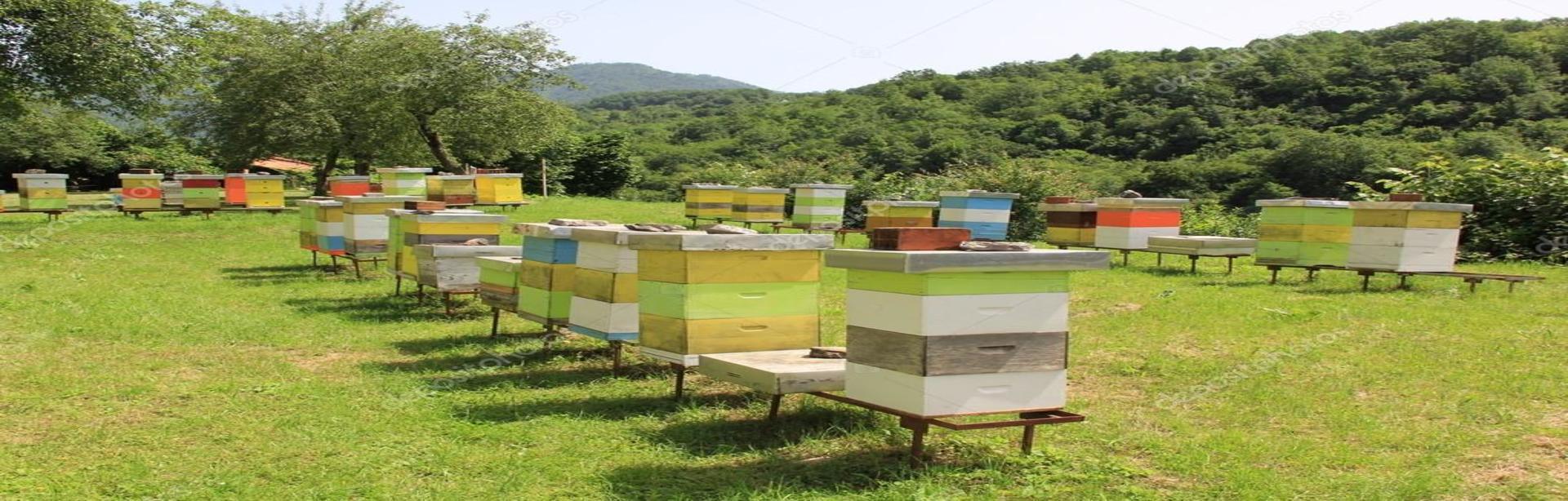 Formation en apiculture